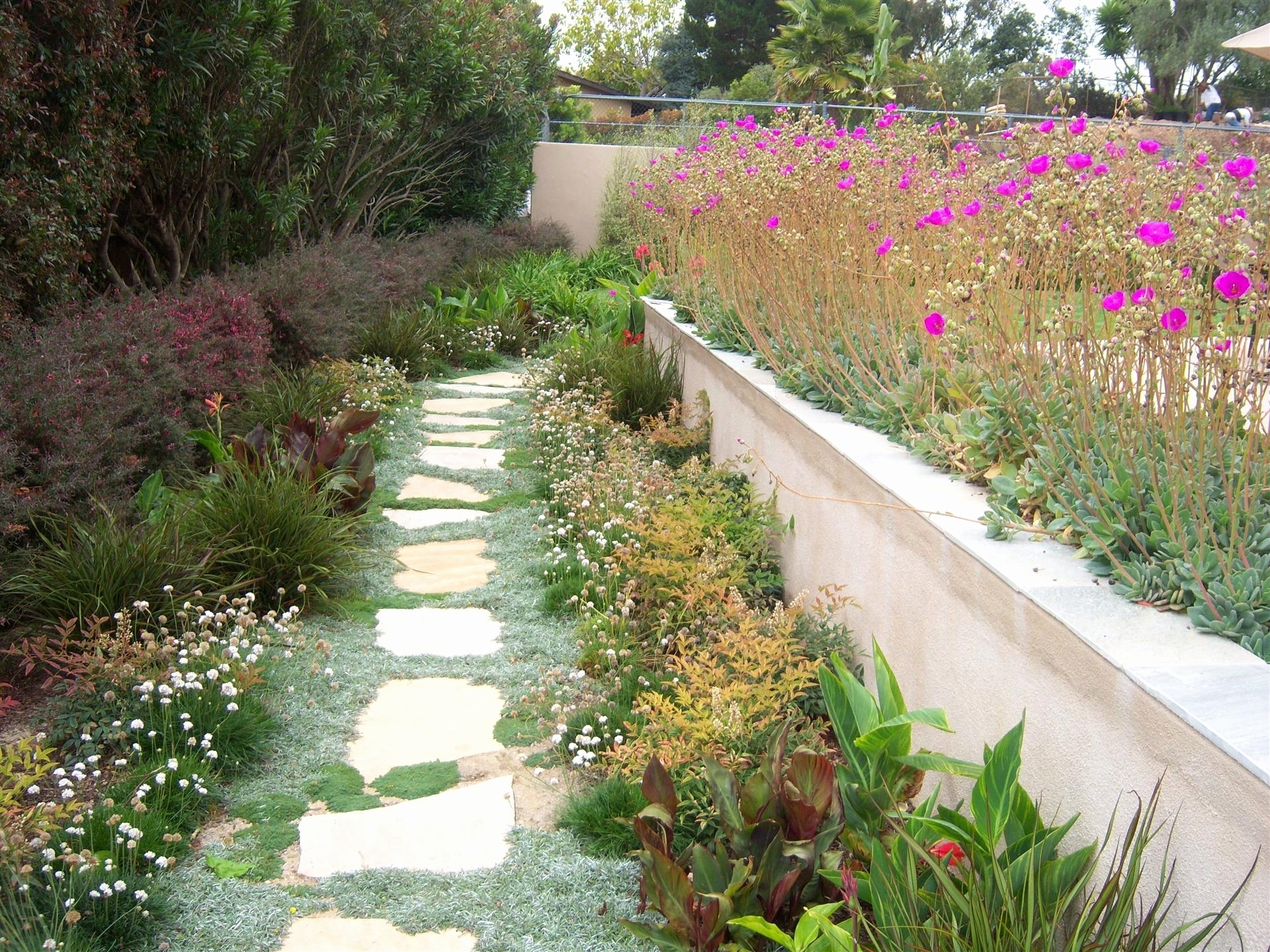 Awesome Drought Tolerant Landscape