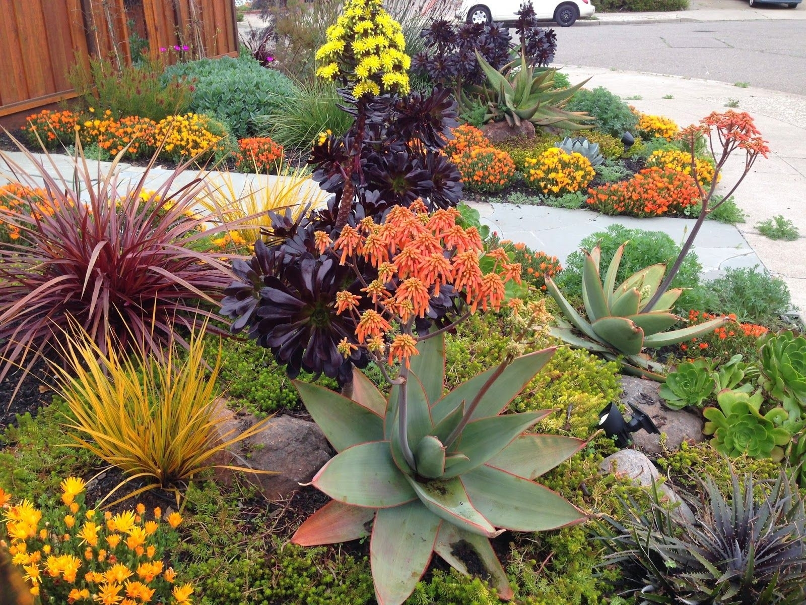 Beautiful Drought Tolerant Landscape