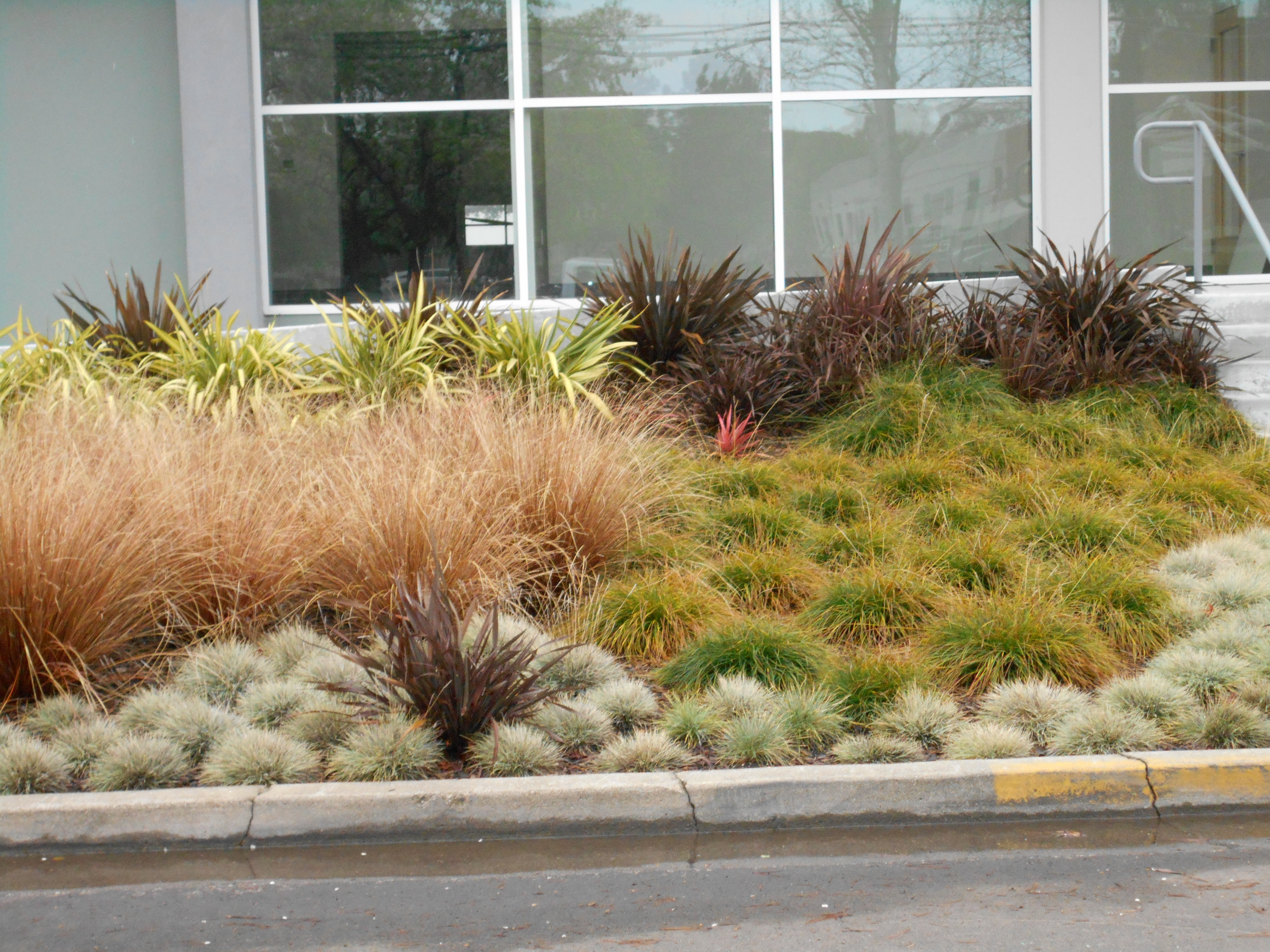 Drought Tolerant Landscape Cover Area