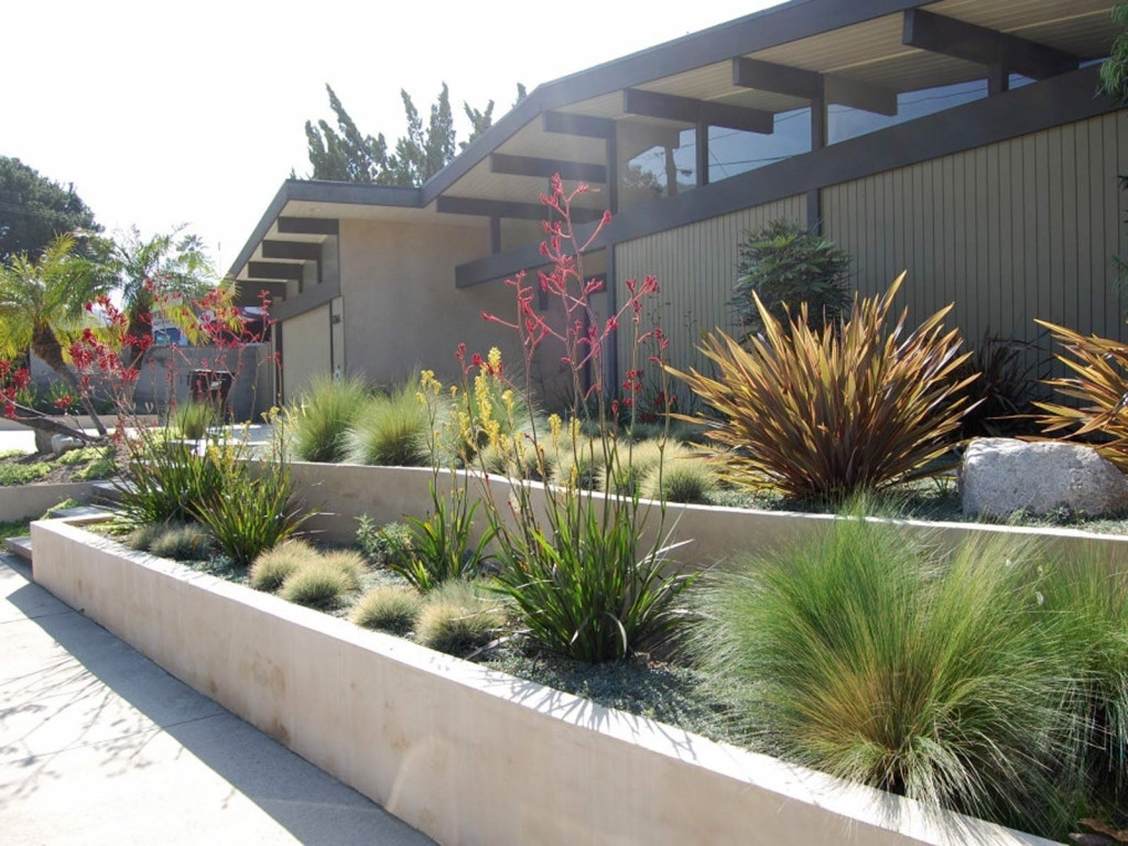 Drought Tolerant Landscape With Gravel And Small Plant