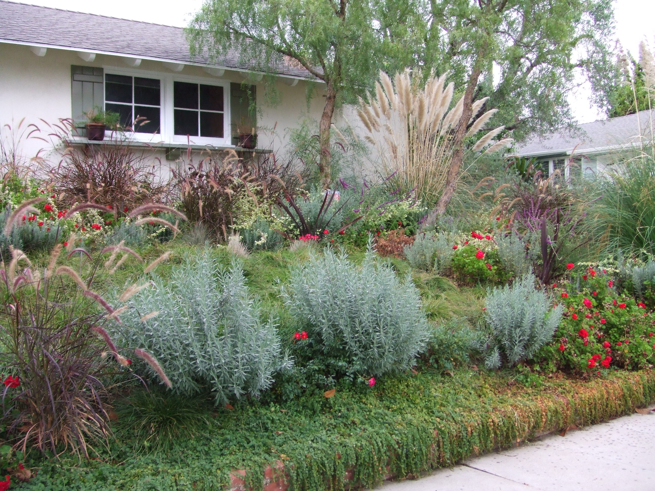 Native Planting Drought Tolerant Landscape